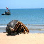 Nét đẹp thú vị của bãi biển Hải Hòa